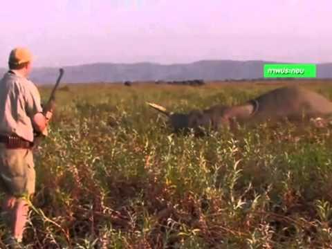 ช้าง 81 ตัว ในซิมบับเวตายเพราะถูกนักล่าสัตว์วางยาพิษ