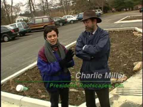 StormwaterPA: Rain Garden / Bioretention Island