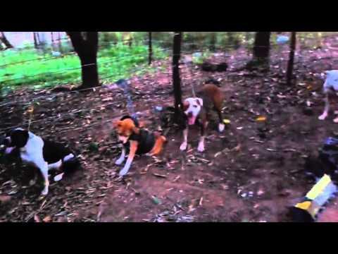 Coletes para caça de javali