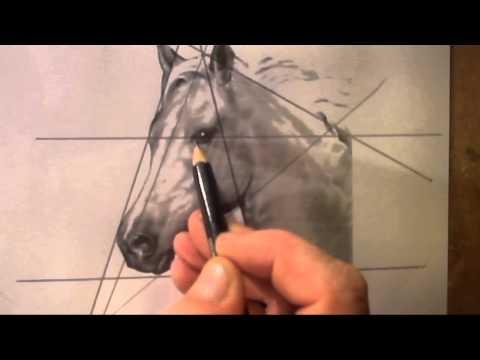 hoe teken je een paardenhoofd - kinderen en beginners