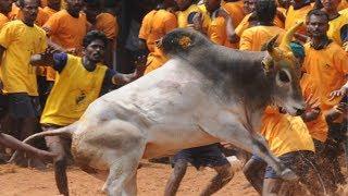 Jallikattu: Bulls to get tokens under new regulations set by Tamil Nadu govt - TIMESOFINDIACHANNEL