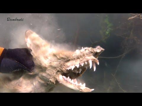 Related video for Carpe koi truffaut
