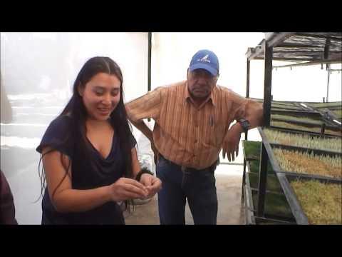 Curso Teórico-Practico para producción de forraje verde hidropónico