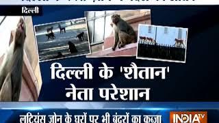 Monkeys invade Parliament, Lutyens Delhi - INDIATV