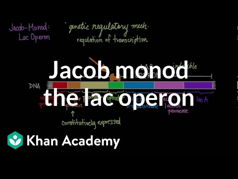 Jacob-Monod: The Lac Operon
