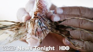 Lionfish Invasion & India's Amazon Launch: VICE News Tonight Full Episode (HBO) - VICENEWS