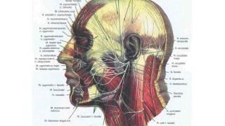 Оперативная анатомия и хирургия супратенториальных менингиом