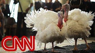Trump pardons Drumstick the turkey - CNN