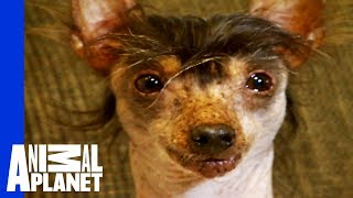 The World's Ugliest, Most Loveable Dogs! - ANIMALPLANETTV