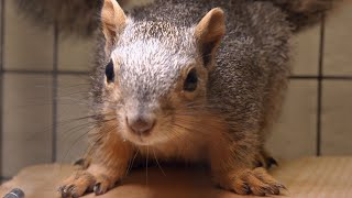 These Baby Squirrels Survived A Hail Storm | Dr. Jeff: Rocky Mountain Vet - ANIMALPLANETTV