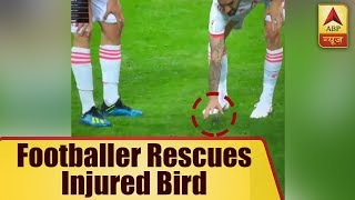 Spanish Footballer Rescues Injured Bird - ABPNEWSTV