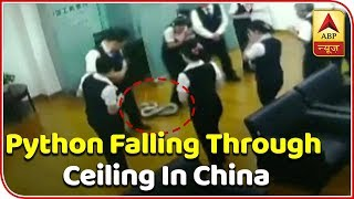 Python Drops From Ceiling During Staff Meeting - ABPNEWSTV