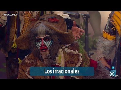 Sesión de Final, la agrupación Los irracionales actúa hoy en la modalidad de Comparsas.