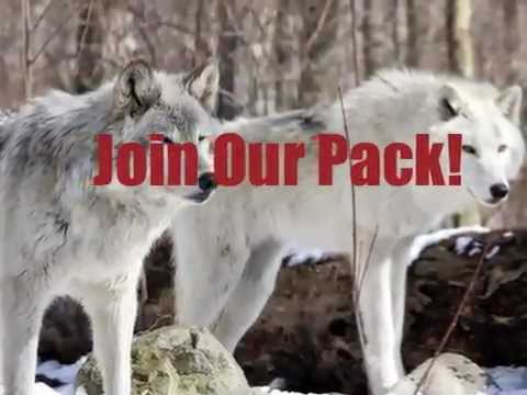 Wolf Pack Partners by Wolf Total Fitness