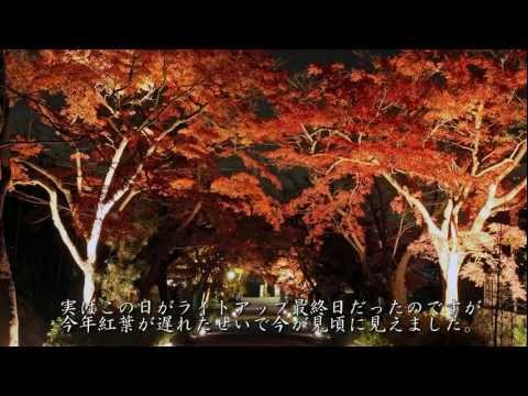 2011年紅葉の京都・滋賀に行ってきた(19)[Kyoto&Shiga in autumn colors 2011(19)]