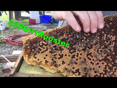 Second Hive Removal With Jeff And Smoking Bees With Taco Bell Nacho Chips