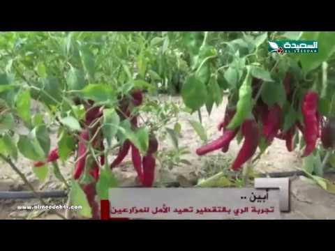 تقرير : الري بالتقطير في محافظة أبين (23-2-2018)