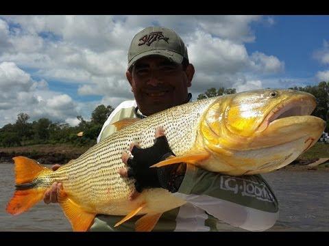 Un trío de tucumanos vivió una experiencia inolvidable pescando dorados en Salto Grande