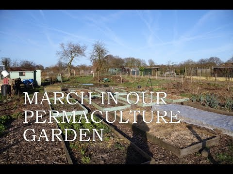 March in our permaculture garden