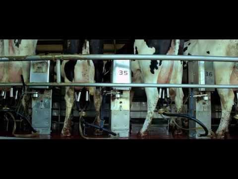 Samsara - 6 min. z w sumie 100 minutowego filmu odkrywającego arkana przemysłu mięsnego