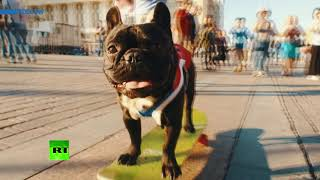 France or Croatia? Nord the skateboarding bulldog predicts World Cup winner - RUSSIATODAY