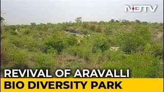 Revival Of Aravalli Bio Diversity Park In Gurugram - NDTV