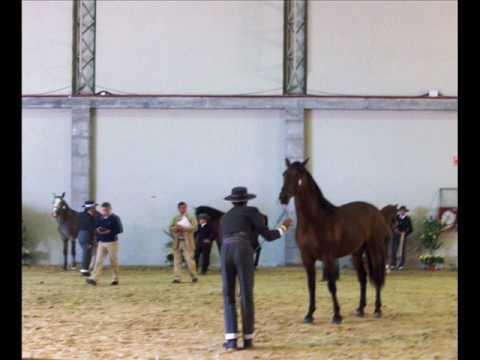 Presentacion de caballos por Hipica Amazonas en el morfologico PRE Equigal09