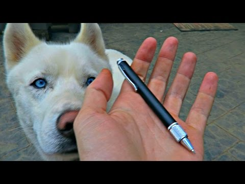 This Pen Might Save Your Life!