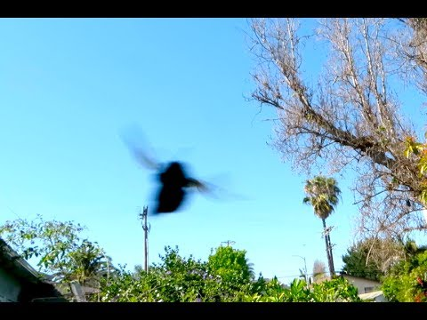 WORLDS LARGEST BEE ATTACKS
