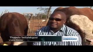 Impact of Botswana's cattle farming sector on economy - ABNDIGITAL