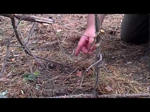 Ловушки на фазана своими руками видео