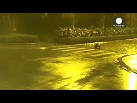 Panda on the loose! Giant panda roams China streets.