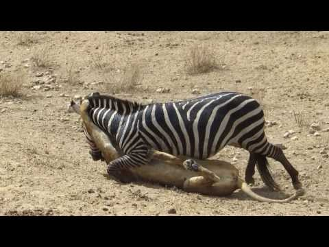 amazing animal video you must watch