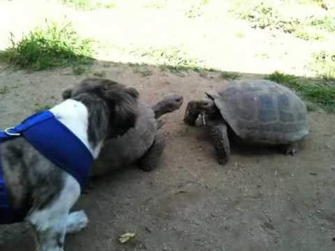 Epic Turtle Fight