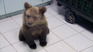 Simon meets a paralysed bear cub - Greece with Simon Reeve: Episode 2 Preview - BBC Two - BBC