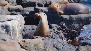 The Wonder List: Galapagos Islands - CNN