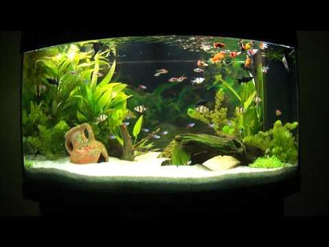 aquarium eau douce magnifique