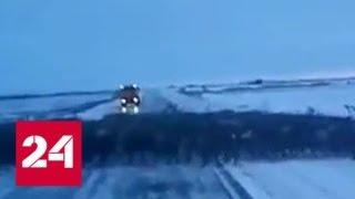 Мигрирующие олени перекрыли трассу в Красноярском крае