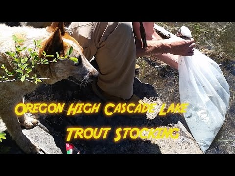 Oregon High Cascades Lake Trout Stocking