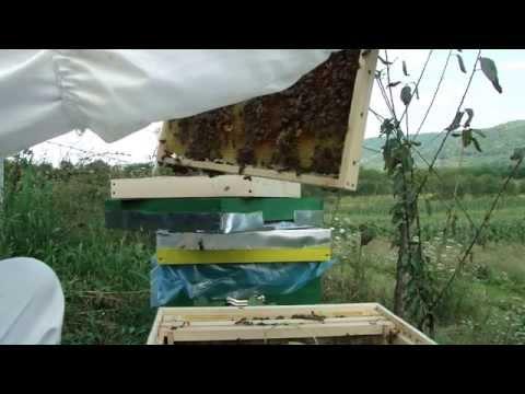 albine  11 august (prima filmare)