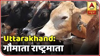 "Twarit Sukh: Uttarakhand Assembly declares cow as ""Rasthra Mata"" - ABPNEWSTV"