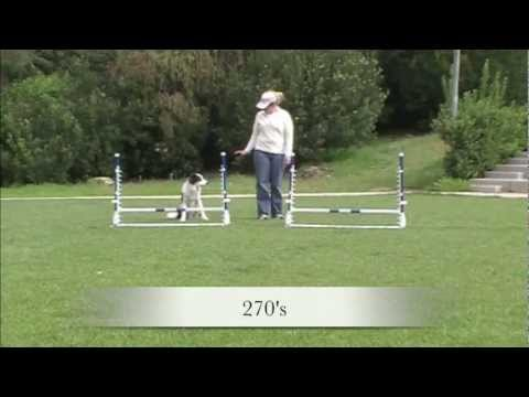 Jump practice patterns - Agility Dog Training