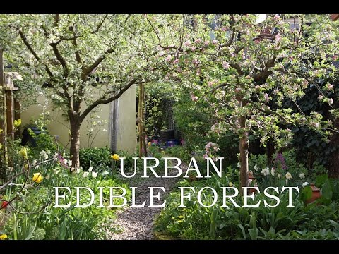 Urban Edible Forest