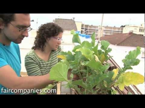 Auto-riego casero con sensores libres para huertos urbanos