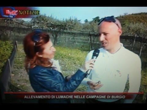 Intervista Tmk Sciacca: allevamento lumache Miceli's Snail di Ciro Miceli Burgio 02 04 2014