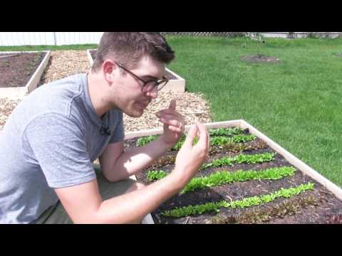 Using Molasses for Amazing Results in High Intensity Organic Gardening