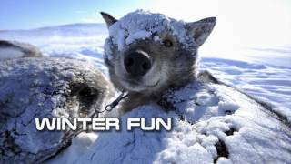 Royalty Free :Winter Fun