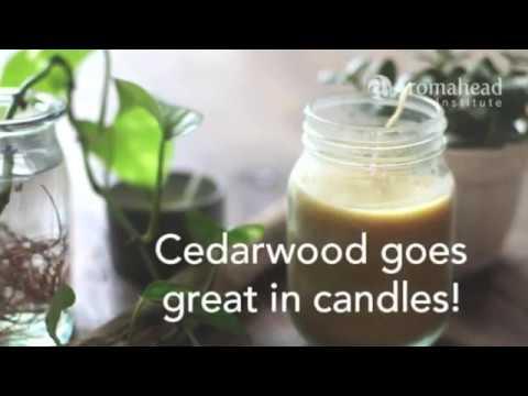 Cedarwood Essential Oil Spotlight