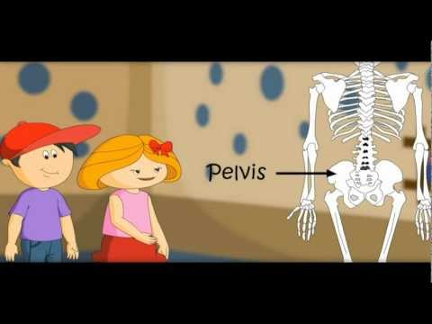 The Skeletal System , Skeleton Dance -How Body Works-makemegenius.com series of Education Videos