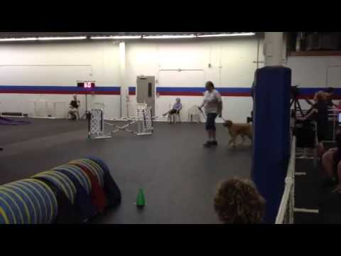 Ripley's AKC Nov Std run (Q) 7-13-14